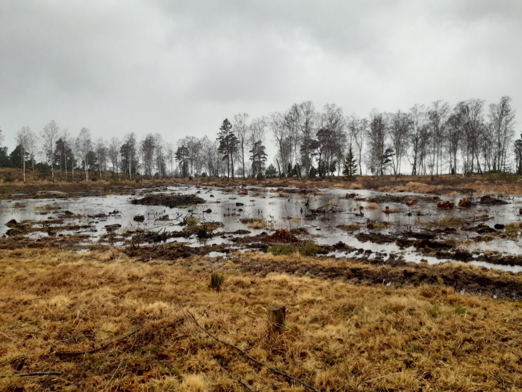 våtmark hammarudda åland