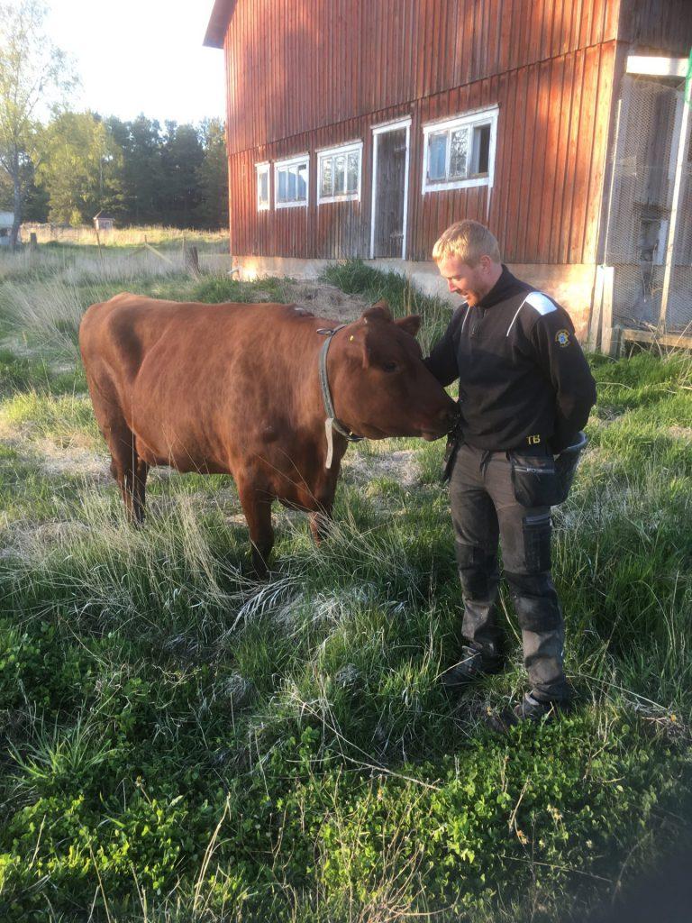 ko och jordbrukare