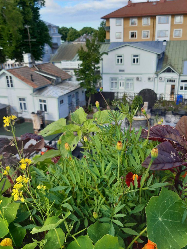växter på tak